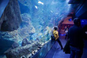 Qué tipo de agua se emplea en los acuarios