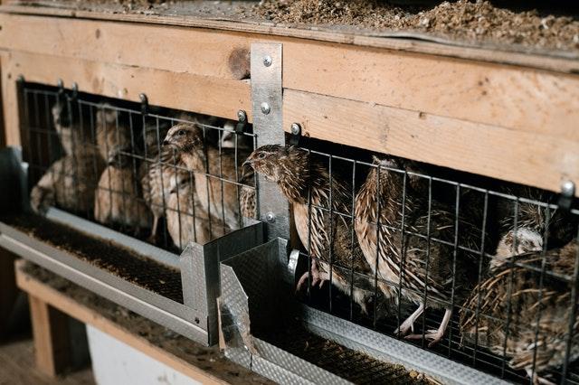 agua potable en granjas avícolas